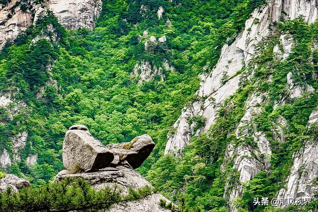 华东最后一片原始森林,深藏着一处隐世秘境